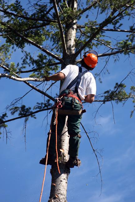 elagueur-grimpeur-arbre