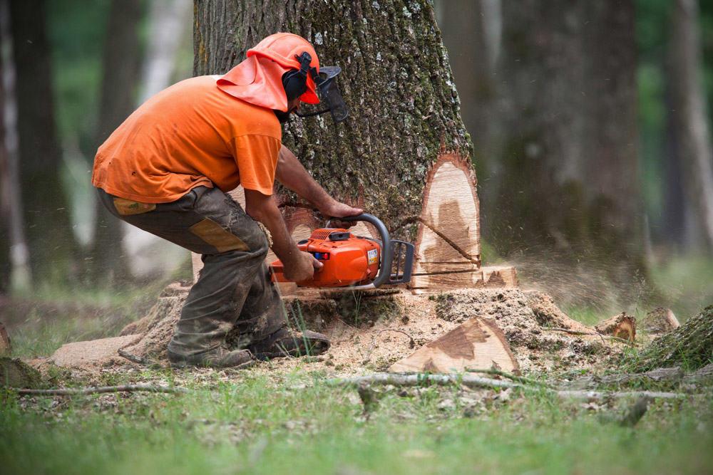formation-elagueur-abattage-arbre