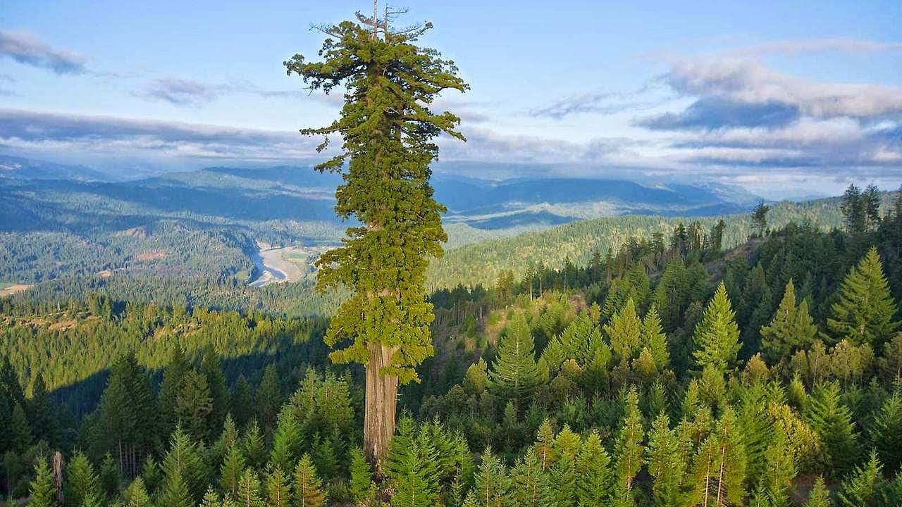 sequoia-article-formation-devenir-elagueur