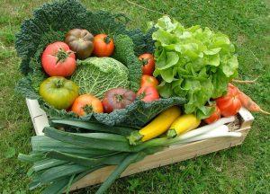 Un panier de légumes fourni par une exploitation maraîchère
